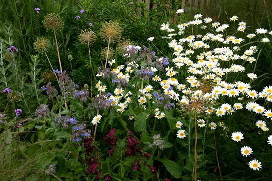 Soft natural cottage planting, wild but controlled